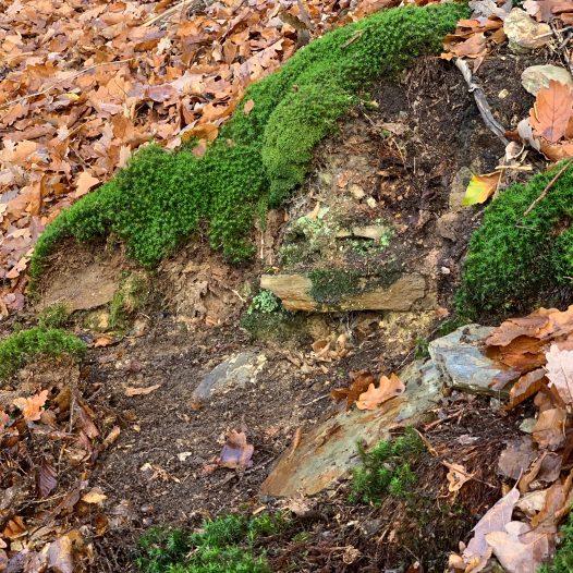Fragmente einer Weinbergsmauer nördlich der Tornlay
