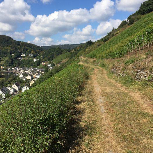 Sommer im Obernhofer Goetheberg