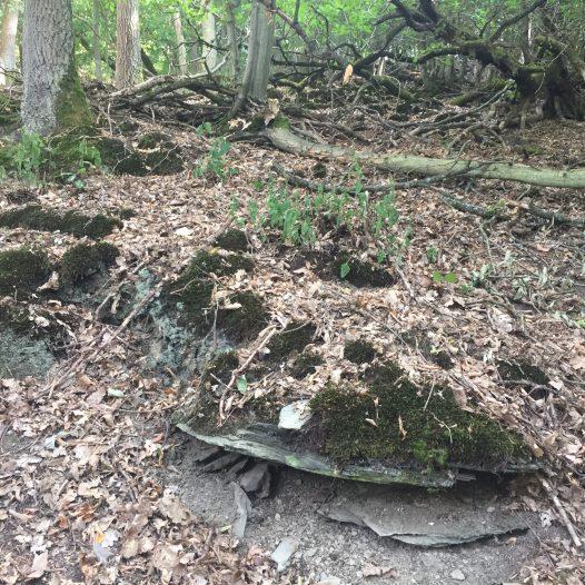 Fragmente einer Weinbergsmauer an der Tornlay