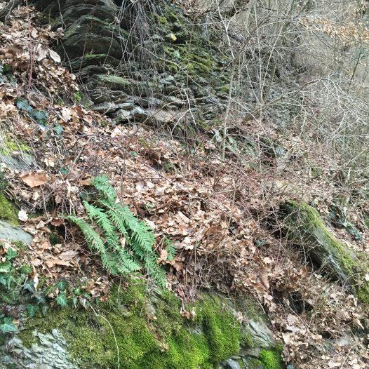 Mauerrest am Burgberg
