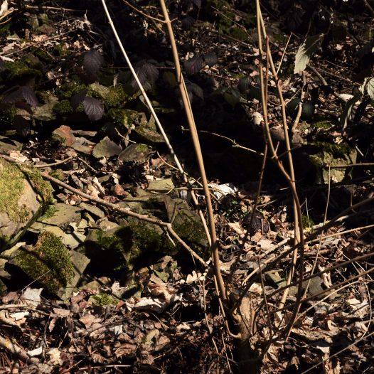 Mauerfragmente Mauerfragmente am Burg-Berg Aull Flur 8