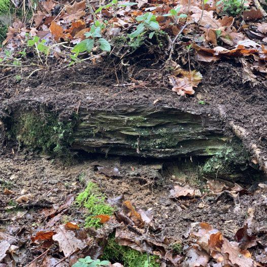 Mauerfragmente am Südhang der Schwarzlay