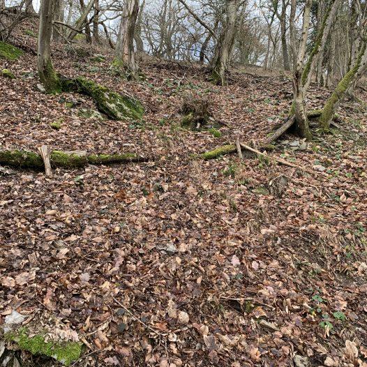 Überreste einer ehemaligen Terrassierung In der Laimkauten