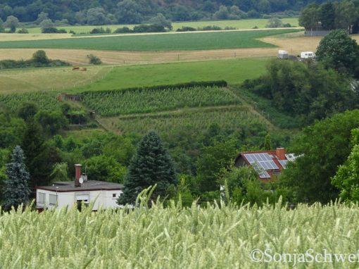 Tiefenbach Weinberg. Alle Rechte vorbehalten